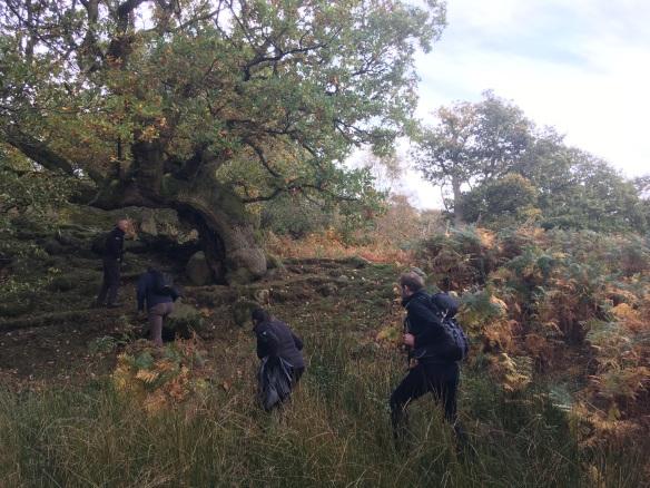 Veteran Tree in High Wood, TWOG visit Oct 2018. Copyright NYMNPA.