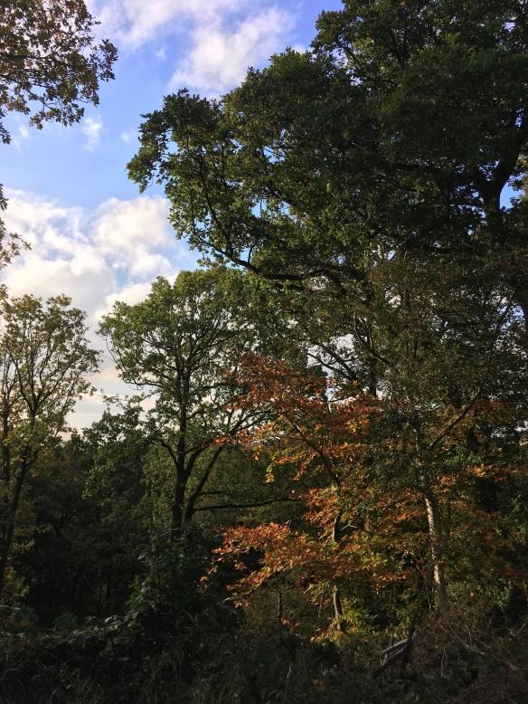 West Arnecliff, TWOG visit Oct 2018. Copyright NYMNPA.