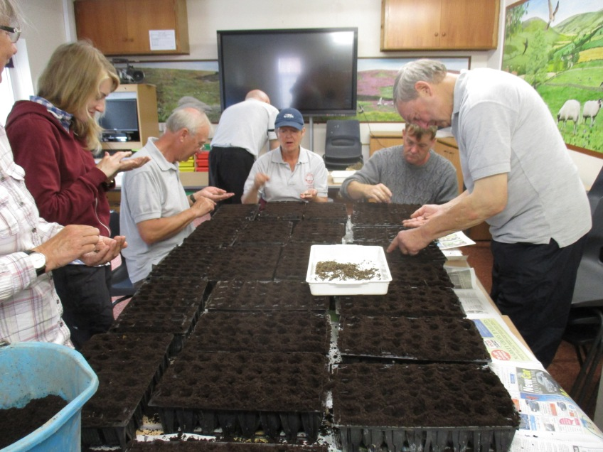 Volunteers, cultivating woodrush plants to plant out. Copyright NYMNPA.
