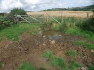 This livestock watering point had become poached (churned up by the livestock) and fine sediment along with livestock excreta could therefore enter the watercourse). Copyright NYMNPA.