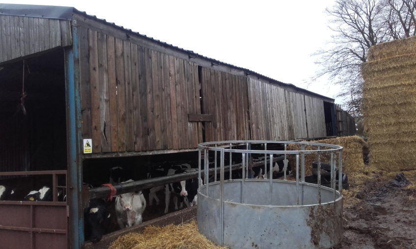 One large livestock housing building in a farmyard had no rainwater guttering or downpipes. This meant clean rainwater would run off the roof, onto an area of the yard which was contaminated with mud and manure. This was resulting in the creation of dirty water which could find its way into the farm drainage system and eventually into the Esk. Copyright NYMNPA.