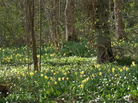 Ancient semi-natural woodland at Howlgate Head. Copyright NYMNPA.