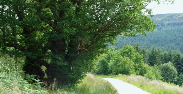 Ingleby Greenhow Forest in summer. Copyright NYMNPA.