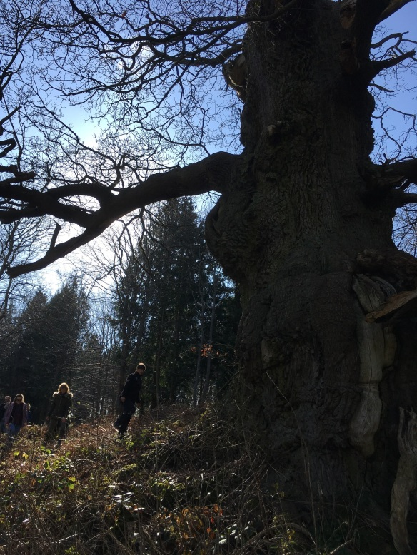 One of the North York Moors' oldest Ancient Oak Trees. Copyright NYMNPA.