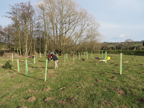 Tree planting and fencing works to stabilise the bankside. Copyright NYMNPA.