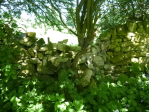 Drystone wall, Coxwold - before repair. Copyright NYMNPA.