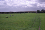 Wades Stone, after work - in the distance. Copyright Tees Archaeology.