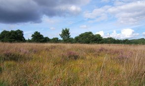 Cawthorn Moor - summer landscape. Copyright NYMNPA.