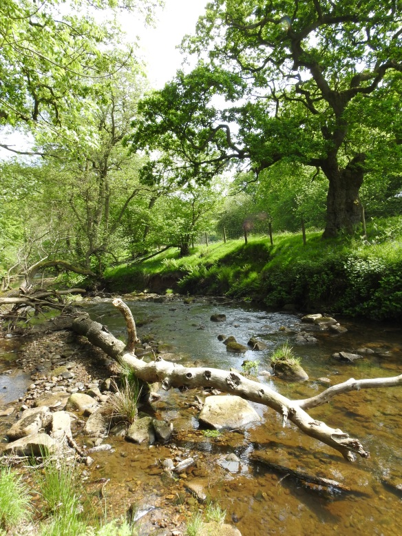 River Rye - copyright NYMNPA.