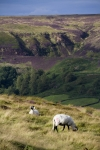 Rosedale by Ebor Images
