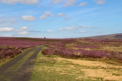 Rosedale railway with blooming heather. Copyright NYMNPA.