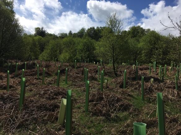 Planting at Ayton Banks. Copyright NYMNPA.
