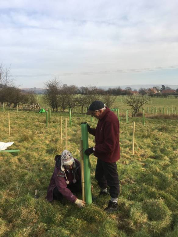Planting at Howe End, Danby. Copyright NYMNPA.