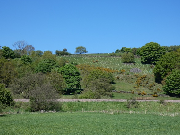 Planting at Oakley Side, Danby - to extend existing native woodland. Copyright NYMNPA.