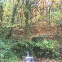 Woodland enterprise — The official blog for the North York Moors National Park