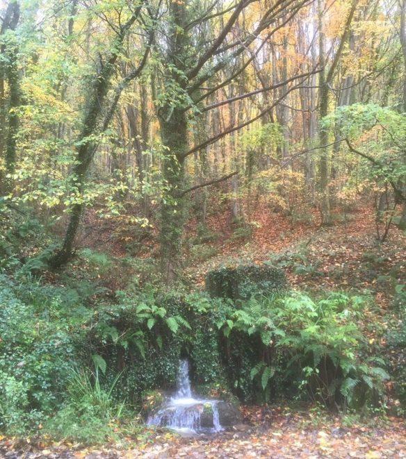 Raincliffe Woods - https://www.raincliffewoods.co.uk/