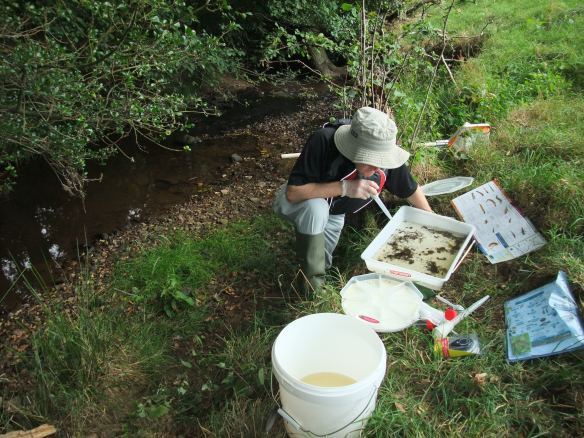 Riverfly monitoring in the Esk Catchment. Copyright NYMNPA.