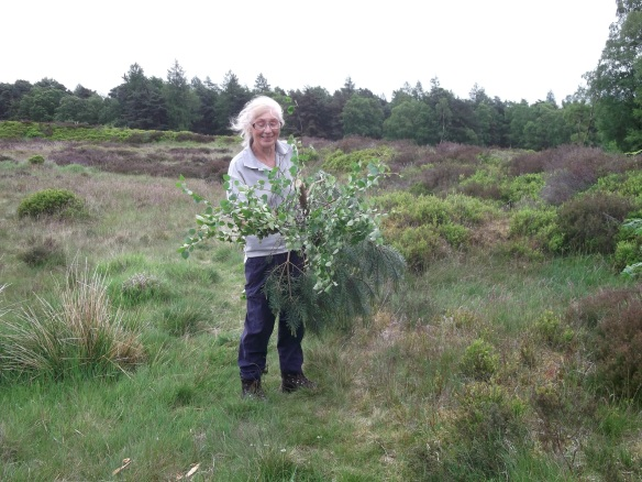 One of our Conservation Volunteers (Ann) clearing scrub at Cawthorn Camps (Scheduled Monument). Copyright NYMNPA.