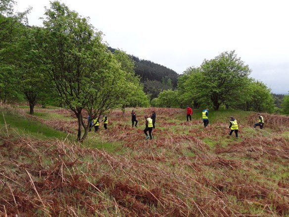 NYMNPA Young Rangers help bash the early bracken shoots in May - Ayton Banks Alum Works (Scheduled Monument). Copyright NYMNPA.