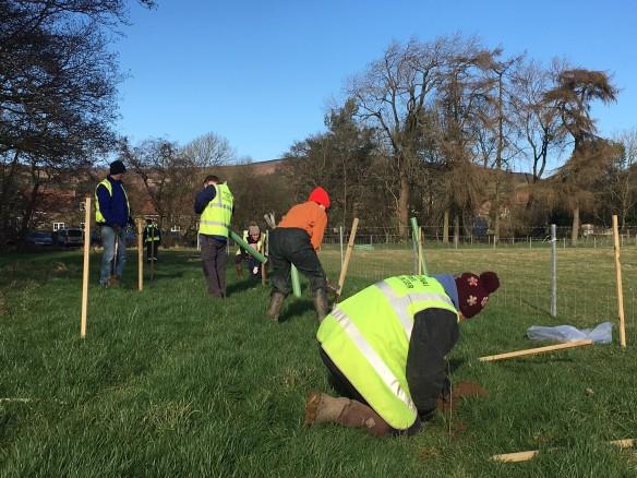 Tree planting task Feb 2020 - more tree planting. Copyright NYMNPA.