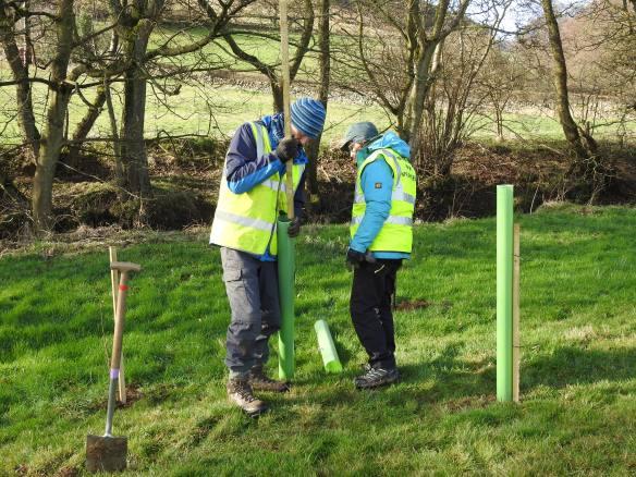 Tree planting task Feb 2020 - more and more tree planting. Copyright NYMNPA.