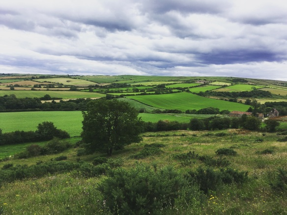Here's a stunning patchwork green view that could be seen when looking over towards Whitby from Borrowby while completing a grassland survey. Copyright Victoria Franklin, NYMNPA.
