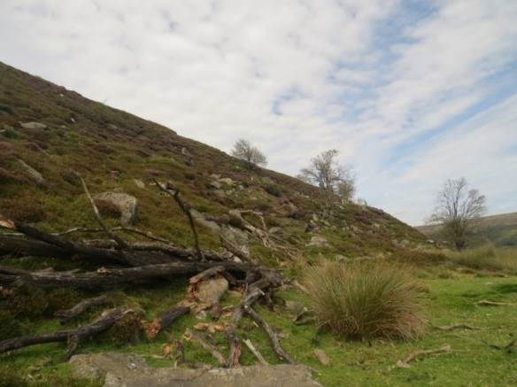 Rosedale. Copyright Vic Fairbrother, Ken Hutchinson and the Updale Natural History Recorder.