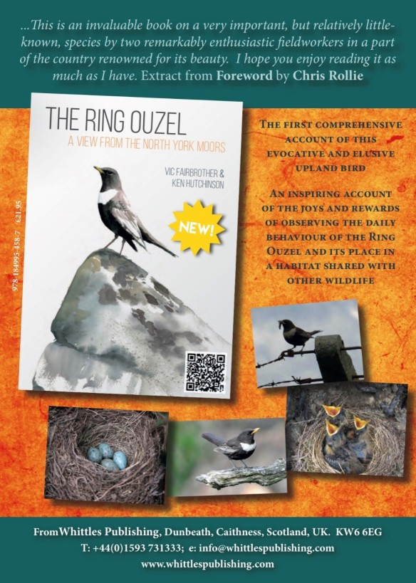 The Ring Ouzel: a view from the North York Moors - advertisement.