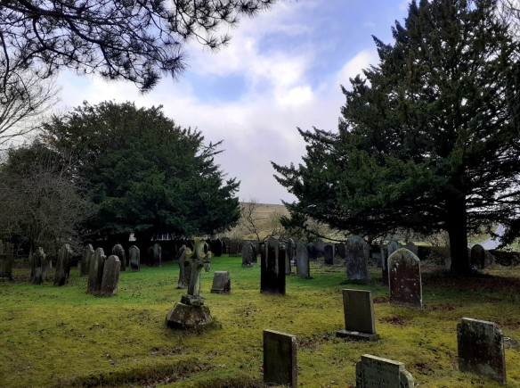 Yew trees in St Mary's churchyard, Goathland. This churchyard contains some of the largest yew trees in the North York Moors. Copyright Sam Newton, NYMNPA.