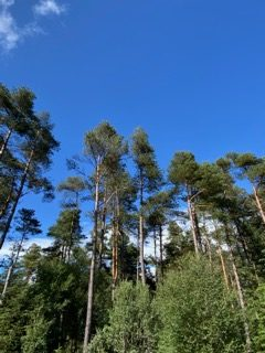 Trees and Sky. Copyright G Nessessian.