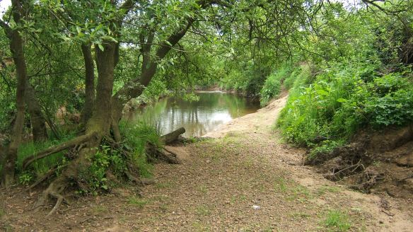 Existing riparian woodland along the Esk. Copyright Chris Watt, NYMNPA.