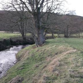 Riparian woodland planting - BEFORE. Copyright Chris Watt, NYMNPA.