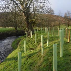 Riparian woodland planting - AFTER. Copyright Chris Watt, NYMNPA.
