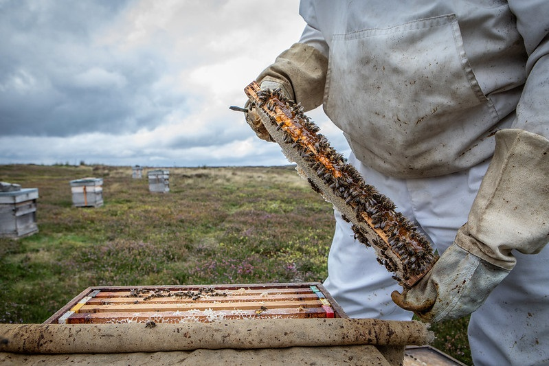Westfields Honey in the North York Moors National Park Credit Polly Baldwin