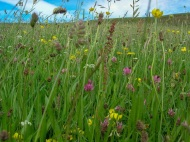 Hay Meadow, Hall Farm, Rosedale. Ami Hudson.